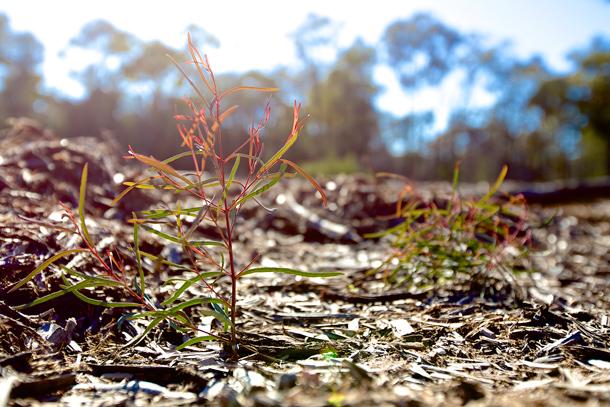 pilliga-plant-optimised