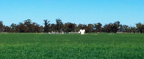 Naparoo wheat crop at our Tintsfield pilot wells on farm land Near Narrabri